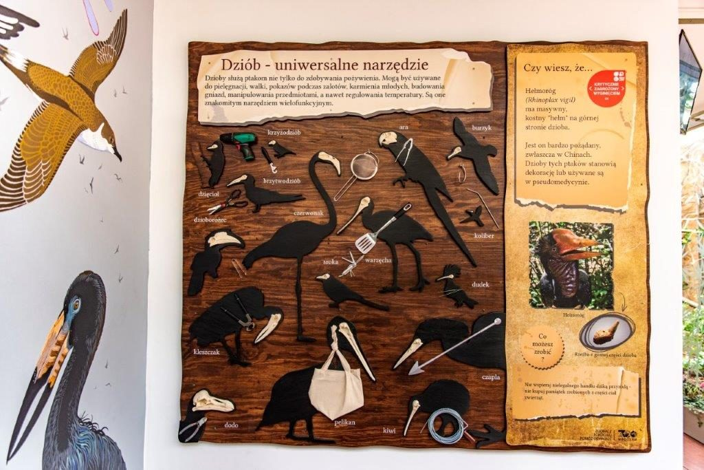 Rzadkie i zagrożone ptaki
