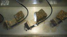 Biomonitoring wody surowej