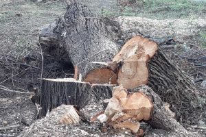 Drugie życie drzew