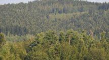Nowa strategia leśna
