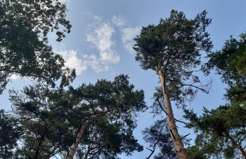 Poziom zniszczeń w drzewostanach
