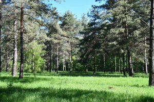 Rezerwat przyrody Polana Polichno
