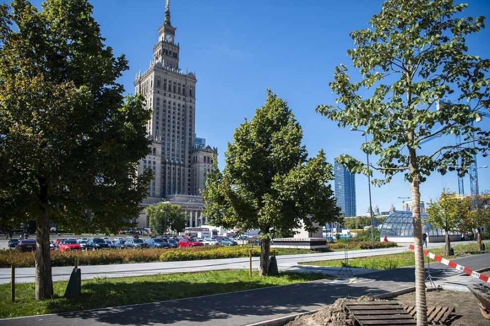 118 dużych drzew