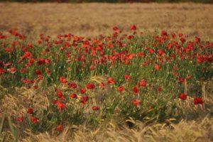 rolnictwa wolnego od pestycydów